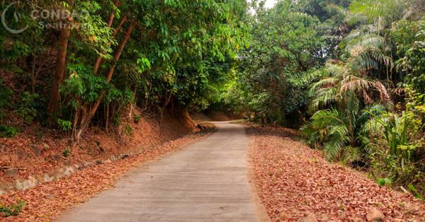 Con đường đi xuyên rừng quốc gia Côn Đảo đến bãi Ông Đụng. Ảnh: condaoseatravel.com
