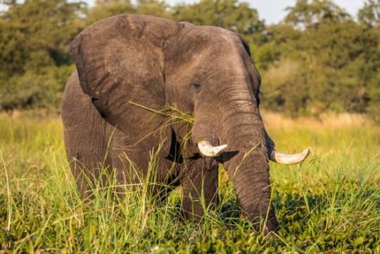 vườn quốc gia Liwonde