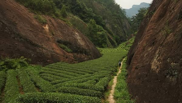 Hành trình qua những vùng đất trồng trà