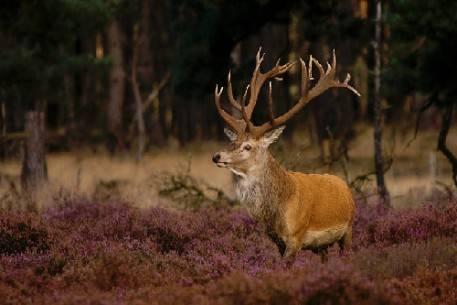 Rừng nguyên sinh ở Hà Lan