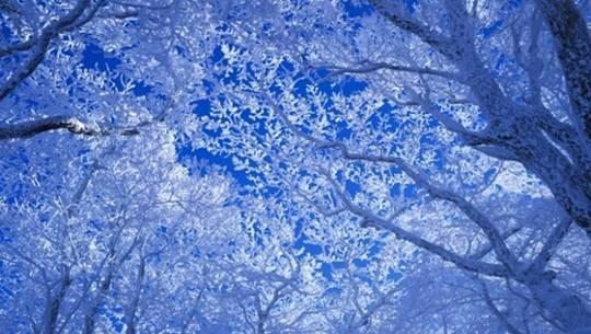Thiên đường tuyết ở Hàn Quốc