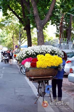 Nhìn thấy những đóa hoa trắng ngần li ti ấy là đã ngỡ như chạm tay vào mùa thu...