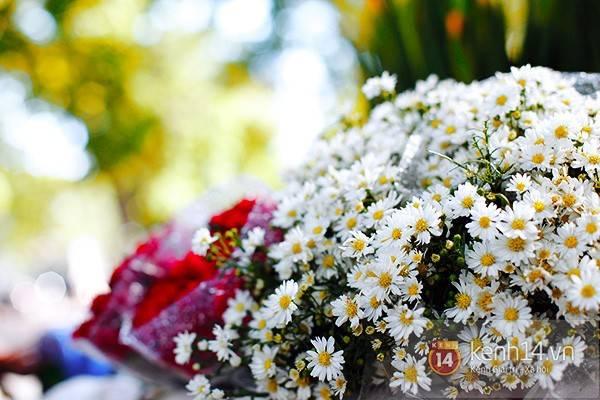 Hàng trăm bông cúc họa mi bé nhỏ đồng đều, trắng muốt chụm vào nhau.