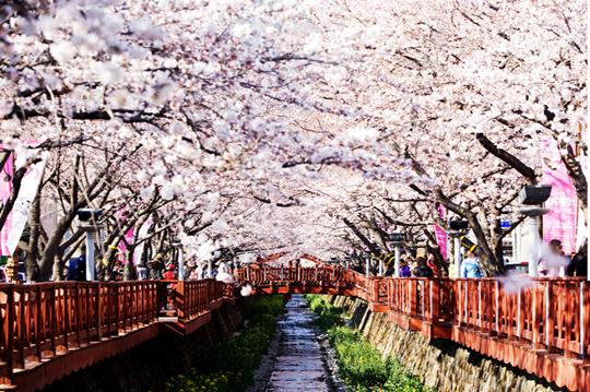 Cầu Romance Bridge ở Jinhae