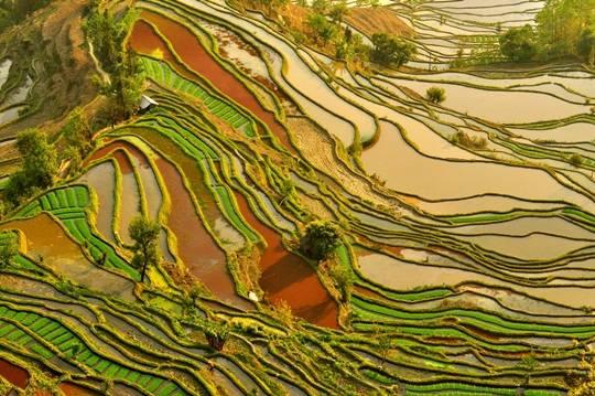 Ruộng bậc thang Hà Nhì Hồng Hà