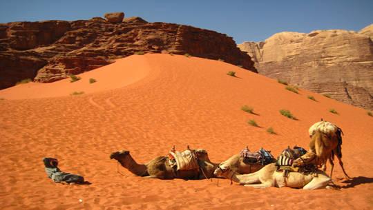 camel-safari-wadi-rum-jordan-arabian-desert
