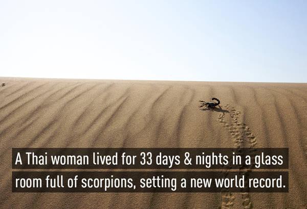 Kỷ lục thế giới với thành tích 33 ngày đêm dũng cảm sống cùng đàn bọ cạp thuộc về một người phụ nữ Thái mang tên Kanchana Ketkaew (39 tuổi)
