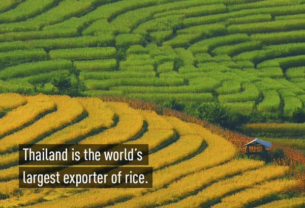 Nước xuất khẩu gạo lớn nhất thế giới: