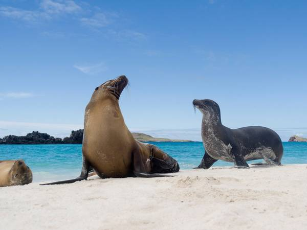 ivivu-see-giant-tortoises-and-sea-lions-in-the-galapagos-islands