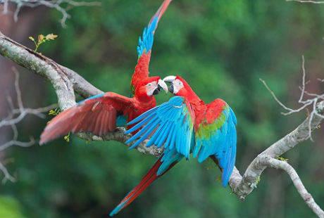 Những loài động thực vật tại khu rừng mưa Amazon