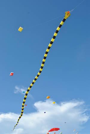 Trong đó có những con diều khổng lồ như diều rắn hổ dài 81 m, lá cờ Tổ quốc Việt Nam 320 m2…