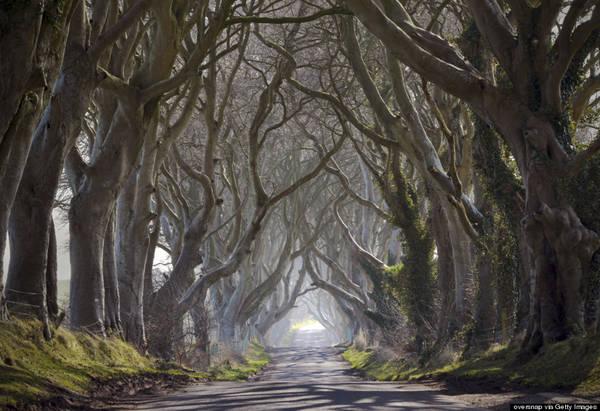 """Con đường """"hắc ám"""" Dark Hedges"""