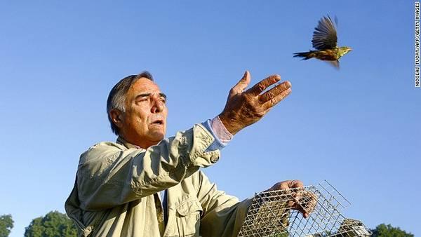 Loài chim Ortolan (chim sẻ rừng), Pháp