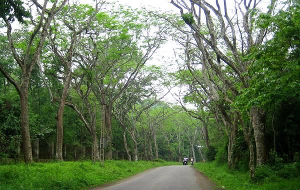 Rừng quốc gia Cúc Phương, Ninh Bình