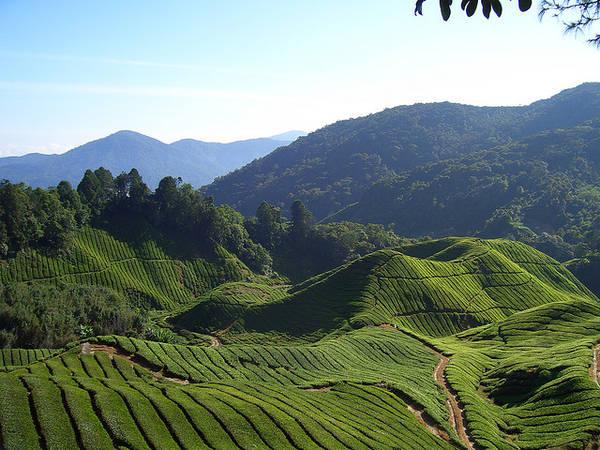 Du lich Malaysia qua 10 dia danh tuyet voi nhat ivivu 8
