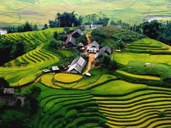 Du lich Sapa - Mùa hè là thời điểm lý tưởng để nhìn ngắm ruộng bậc thang, ngập trong sắc vàng cùa lúa