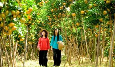 Những vườn cây trái trĩu quả
