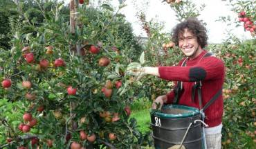 Bạn có thể tìm kiếm công việc hái trái cây tại các nông trại (Ảnh: Broadwaterfarm)