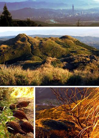 Du lịch Đài Bắc - Công viên quốc gia núi Dương Minh vào mùa xuân trở nên rực rỡ hơn