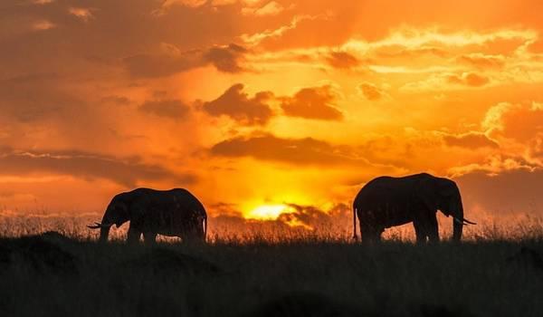 6. Masai Mara, Kenya