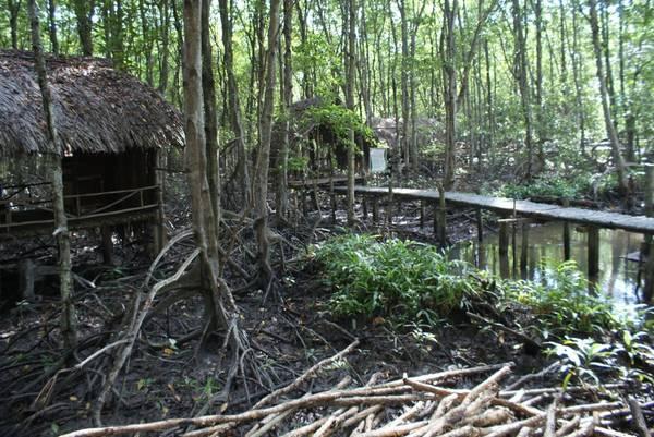 Du lich Sai Gon - Hoặc ngồi nghỉ ngơi tại những căn chòi giữa rừng