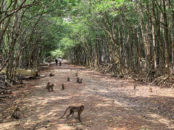 """Du lich Sai Gon - """"Vương quốc"""" của loài khỉ"""