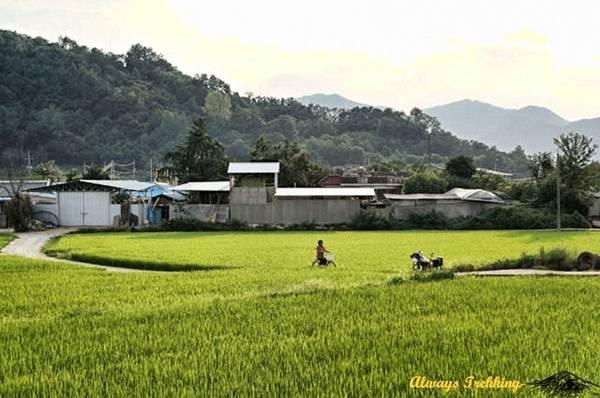 Du lich Han Quoc - Chạy xe dọc Hàn Quốc
