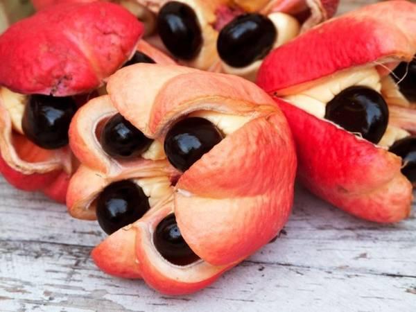 Du lịch thế giới - Ackee là một loại trái cây phổ biến ở Tây Phi