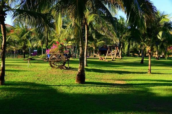 Hàng dừa xanh mát