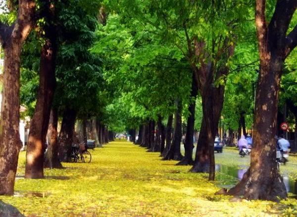 Du lịch Hà Nội ngắm lá vàng rơi