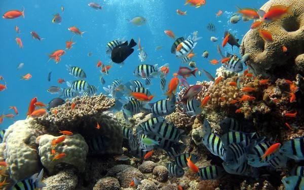 Du lịch Phú Quốc lặn biển ngắm rạn san hô tuyệt đẹp