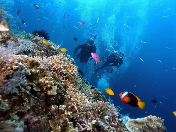 Du lịch Phú Quốc lặn biển ngắm san hô tuyệt đẹp