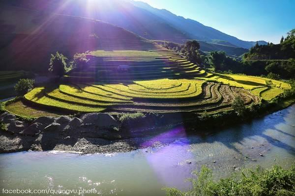Du lịch Tây Bắc - Những ruộng bậc thang lúa chín vàng rộm ở vùng núi phía Bắc.