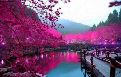 du lịch châu Âu  - Thành phố Tokyo sẽ giúp người cung Song Ngư tìm được về thế giới nội tâm.