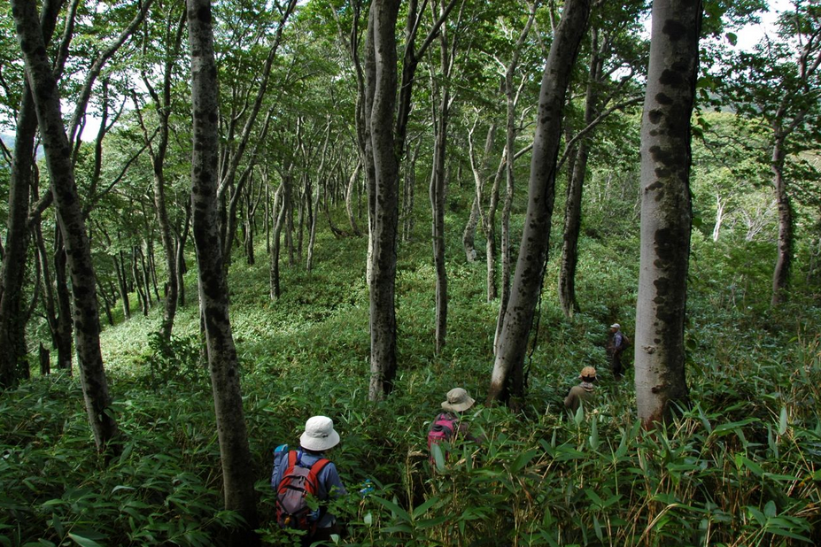 du lịch Nhật Bản - Vùng núi Shirakami