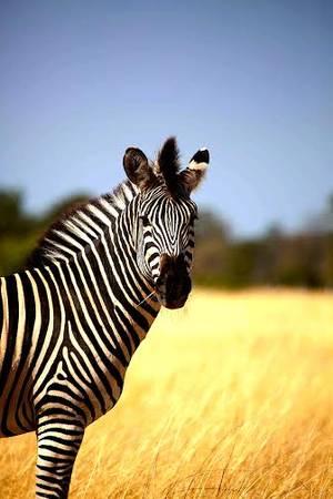 du lịch Zimbabwe