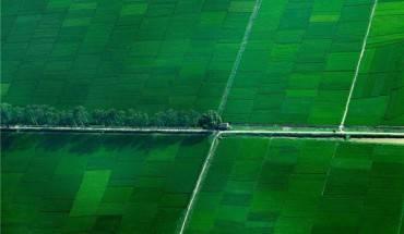 Những cánh đồng lúa mang vẻ đẹp như những tấm thảm nhung xanh mướt tầm mắt. Ảnh: Nguyễn Hải Đông
