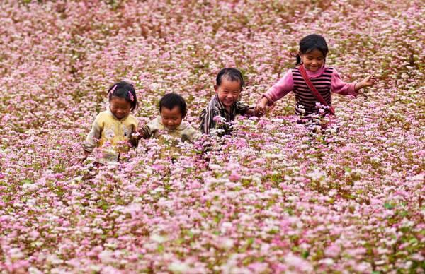 Hà Giang - mùa hoa tam giác mạch.