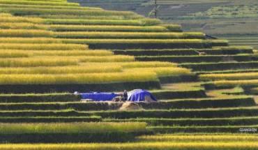 Mỗi người một việc, họ cứ cần mẫn gặt từng ô cho đến khi nắng chiều khuất sau rặng núi