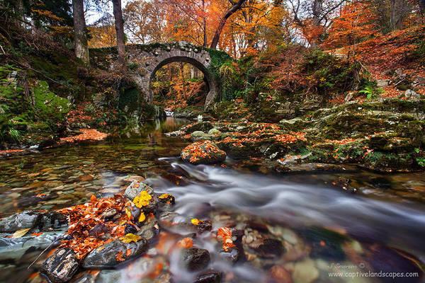 Cây cầu Foley nằm trong công viên Tollymore, Bắc Ireland, Vương Quốc Anh