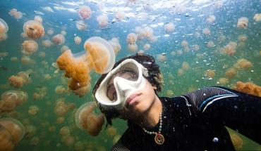 Bơi trong hồ chỉ toàn sứa. Ảnh: Nadia Aly