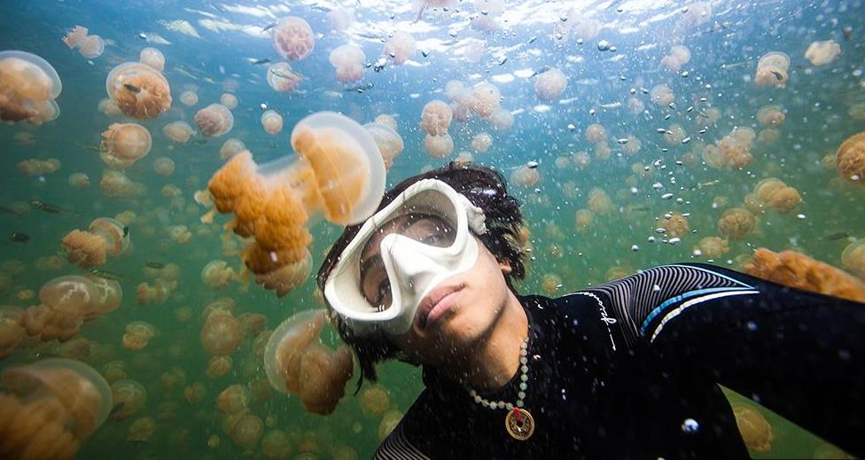Bơi trong hồ chỉ toàn sứa.