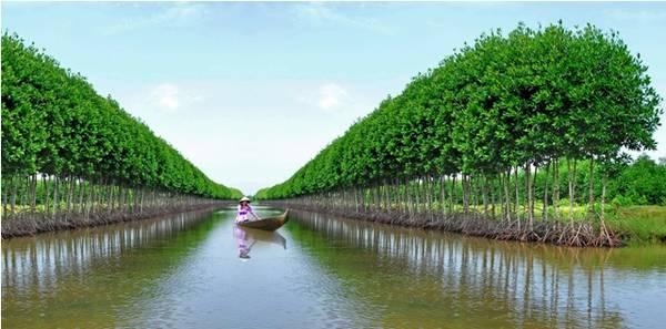 Du lịch Cà Mau - Sự kết hợp gữa rừng và biển đã tạo cho Cà Mau sức hút du khách khắp nơi. Ảnh vegiare247.