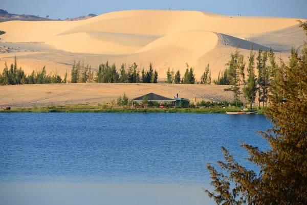 Nằm giữa những triền cát trắng nên Bàu Bà còn được gọi là Bàu Trắng và ngày nay cũng thường được gọi với cái tên Bàu Sen bởi cứ vào mùa sen nở, sắc hồng của sen phủ kín cả một vùng hồ. Ảnh: bruisedpassports.com