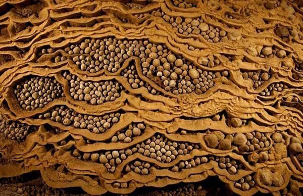 """Ngoài ra, người ta còn phát hiện những viên """"ngọc trai"""" hang động (ngọc thạch bao bọc một loại hạt giống như ngọc trai dưới biển, thành phần chủ yếu là canxit) to bậc nhất thế giới ở Sơn Đoòng."""
