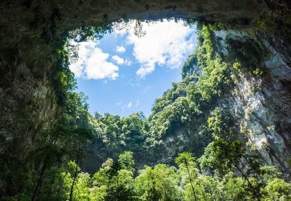 Trong hang Sơn Đoòng, các nhà thám hiểm phát hiện cả một cánh rừng nguyên sinh với thảm thực vật phong phú, chưa hề có dấu vết con người.