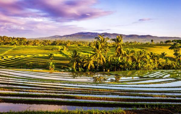 Khung cảnh buổi sáng sớm trên một cánh đồng tại Bali, Indonesia