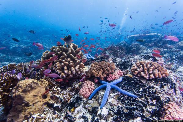 Du lịch lặn biển tại Palawan cực kỳ phát triển với những dải san hô ngầm và vô số loài cá đủ màu sắc.