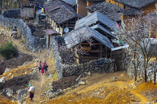 """Tác phẩm """"Xuân về cao nguyên đá"""" của tác giả Trần Anh Tuấn. Ảnh: VnExpress"""
