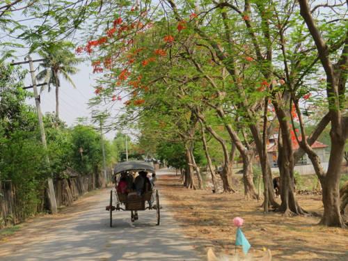 Xe ngựa là phương tiện đi lại chủ yếu ở cố đô Inwa (Mandalay).